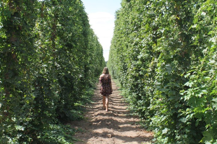 Rogue Hop Fields, Independence, Oregon - The Atlas Heart 2015 Review