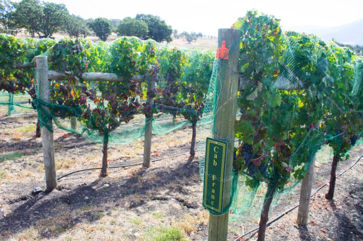 Complete Guide to Wine Tasting in Southern Oregon - USA Travel