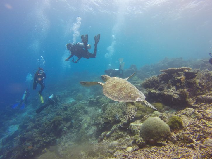 scuba diving in Indonesia - Southeast Asia travel