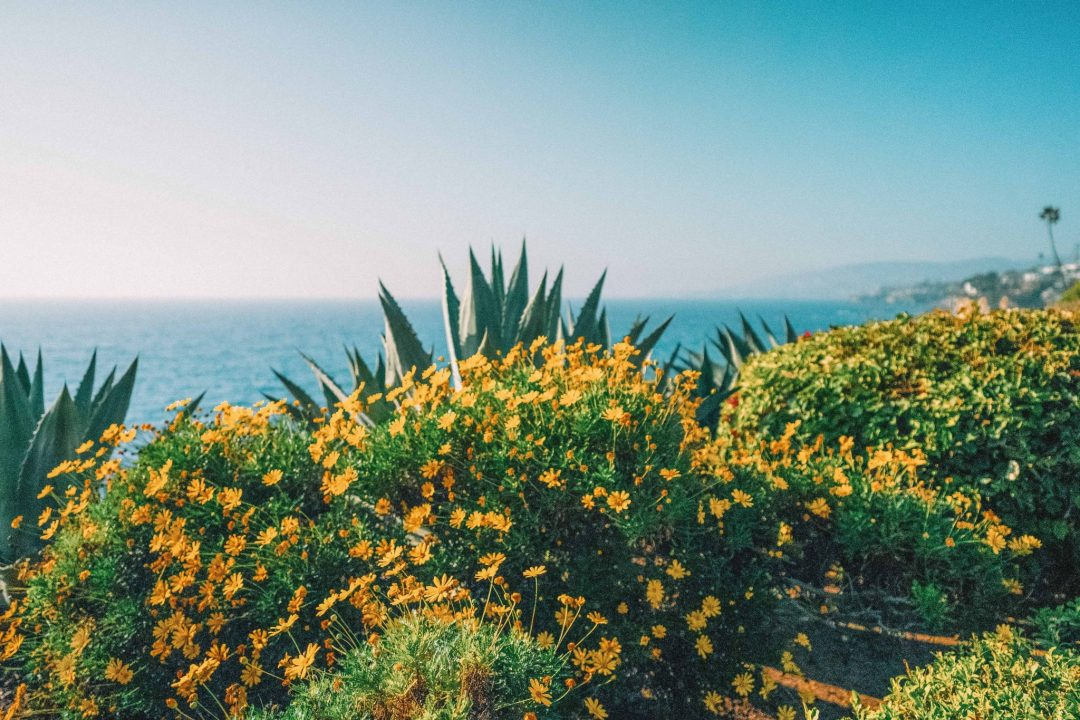 tips for visiting orange county beaches