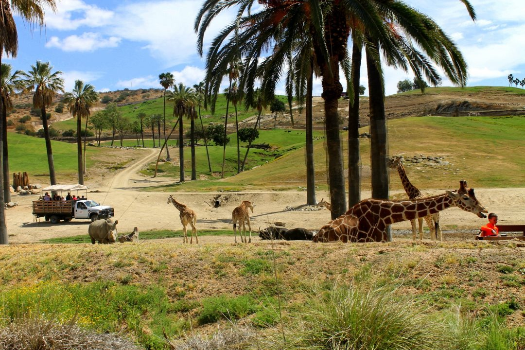 best things to do in san diego - san diego zoo & safari park