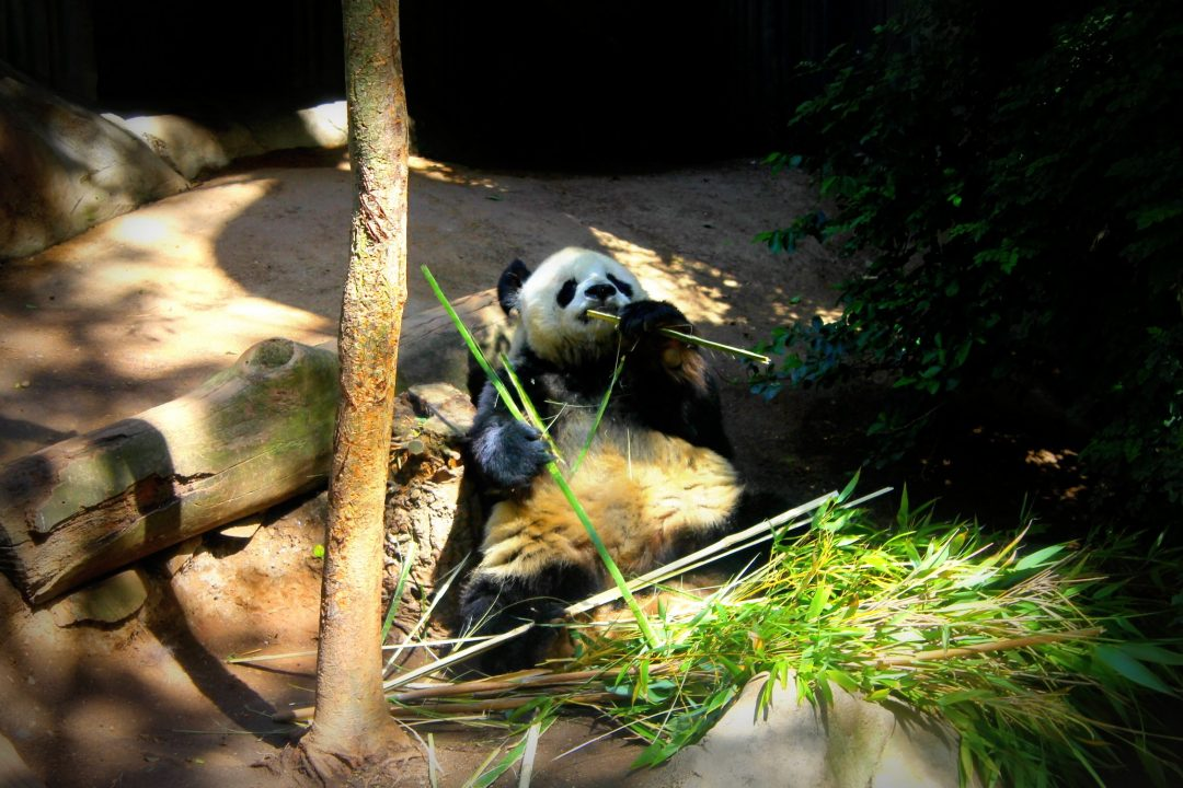 things to do in san diego with kids - san diego zoo