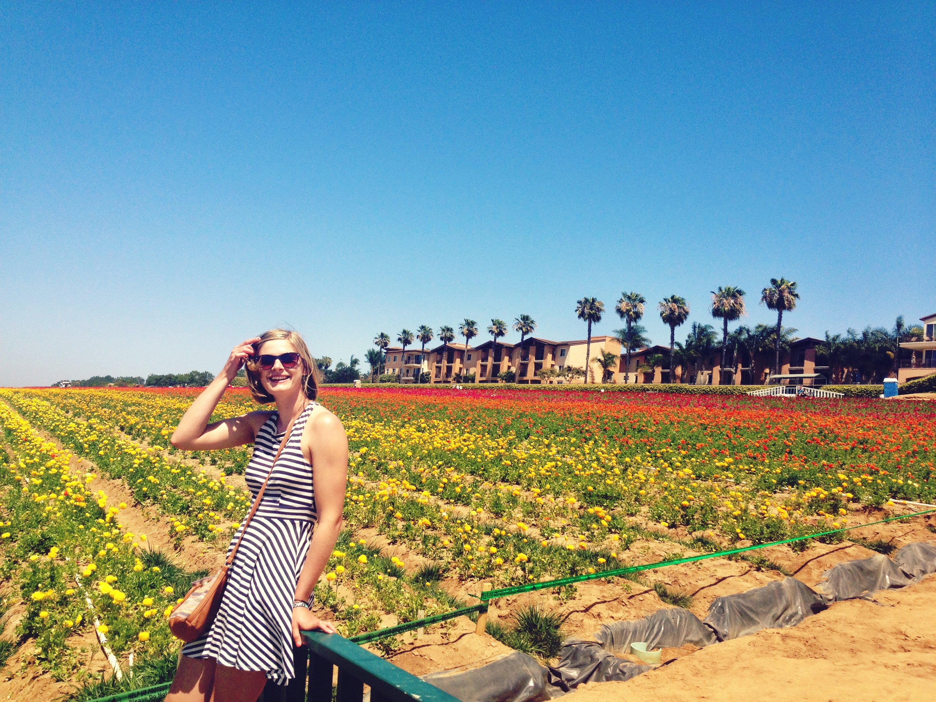 Flower Fields in Carlsbad, San Diego | southern California attractions