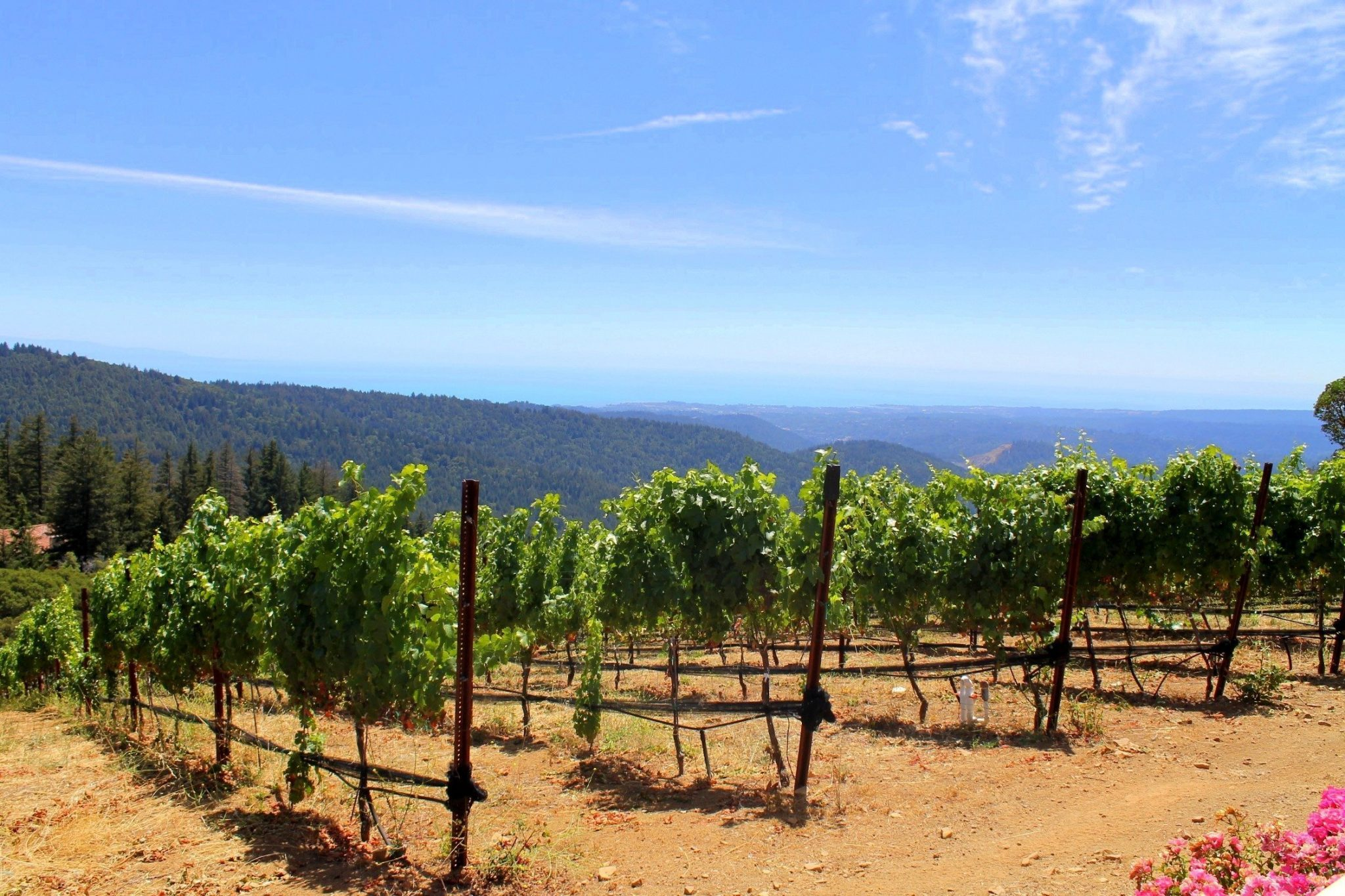 How to Spend a Day in San Jose, California | Things to do Near San Jose | South Bay Santa Cruz Mountain Wineries