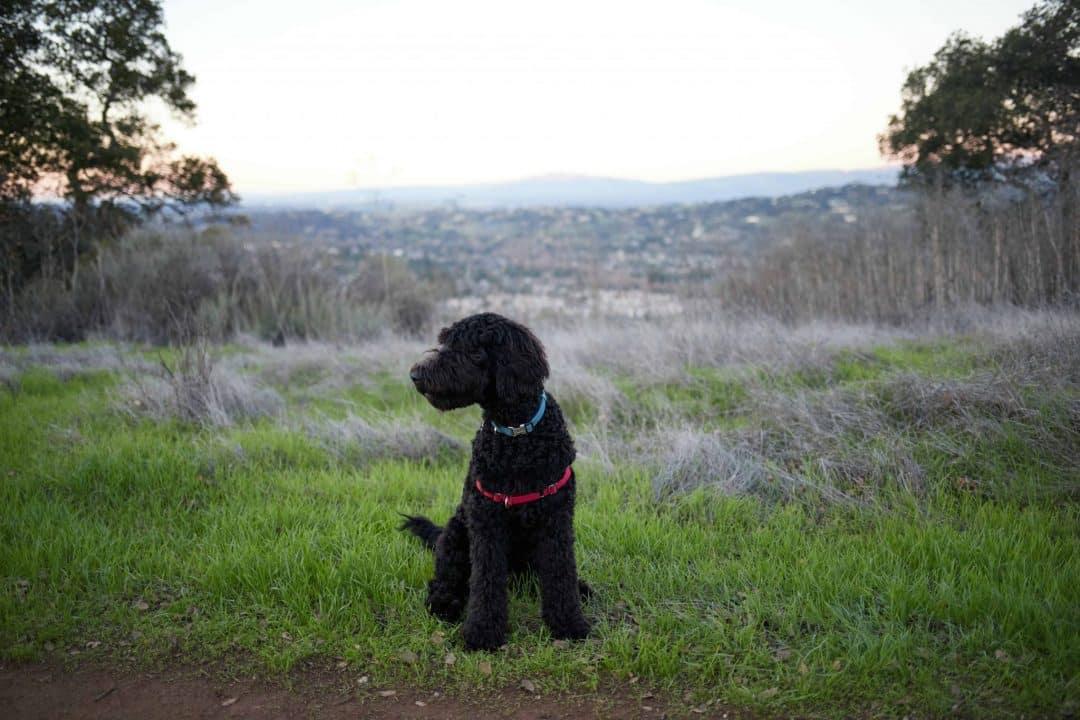 Almaden Quicksilver Park - San Jose hikes