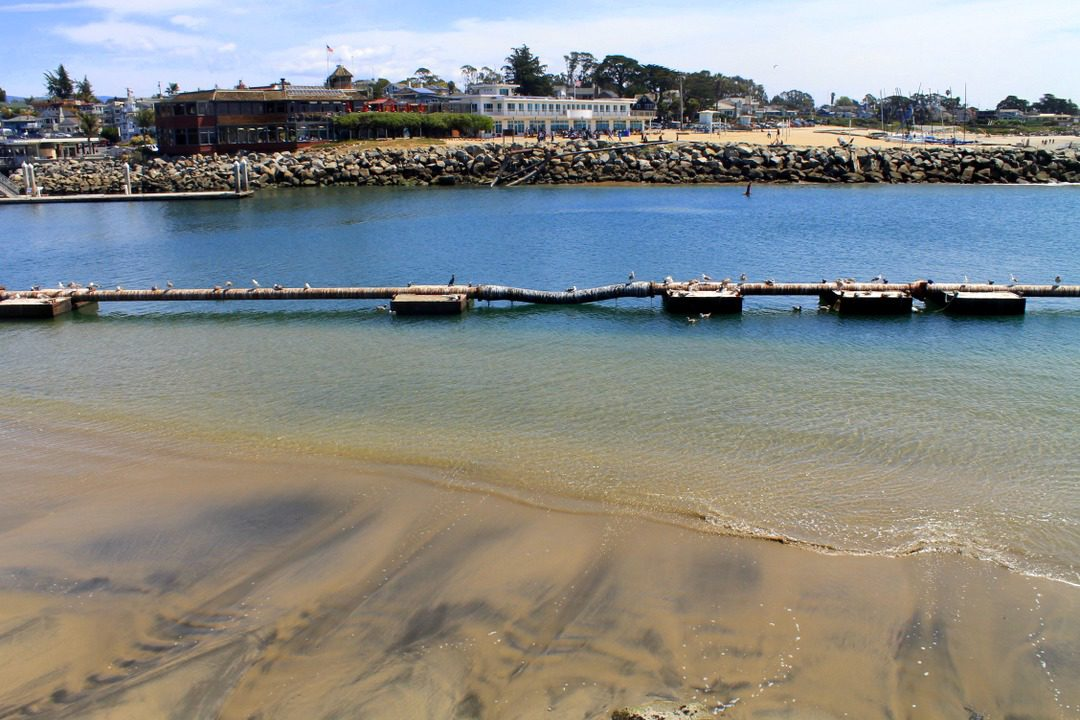 fun things to do in santa cruz - seabright beach