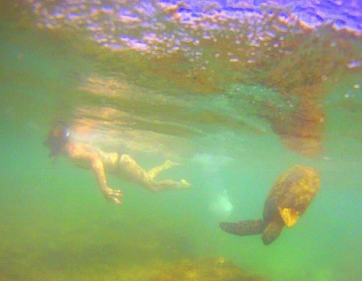 Snorkeling with a turtle - North Shore, Oahu, Hawaii