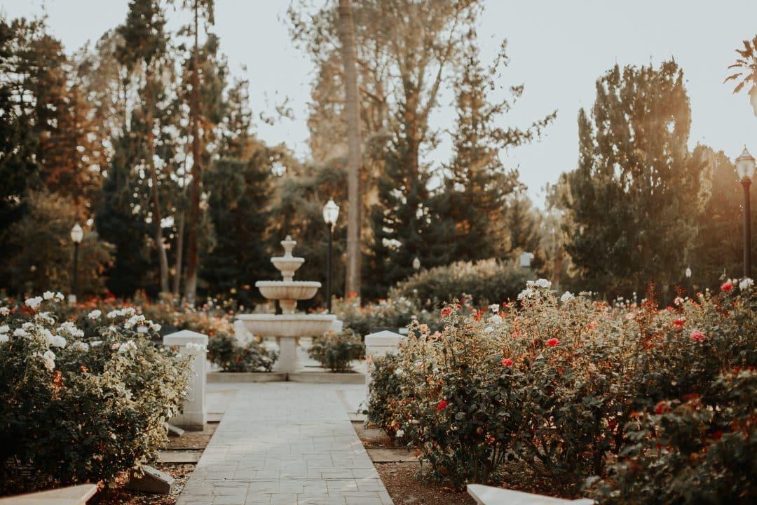 best of sacramento- capitol rose garden sacramento