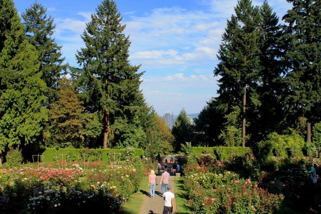 International Rose Test Garden | Free Things to do in Portland