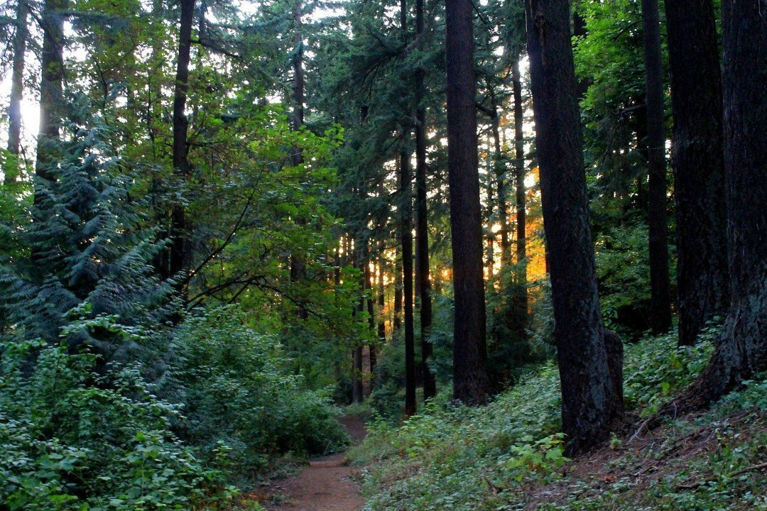 Mt. Tabor Park Portland, Oregon | unique things to do in Portland Oregon