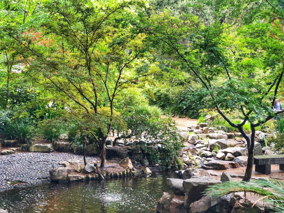 best parks in los angeles - Descanso gardens