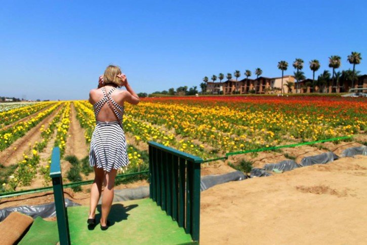Flower Fields - San Diego, California - The Atlas Heart 2015 Review