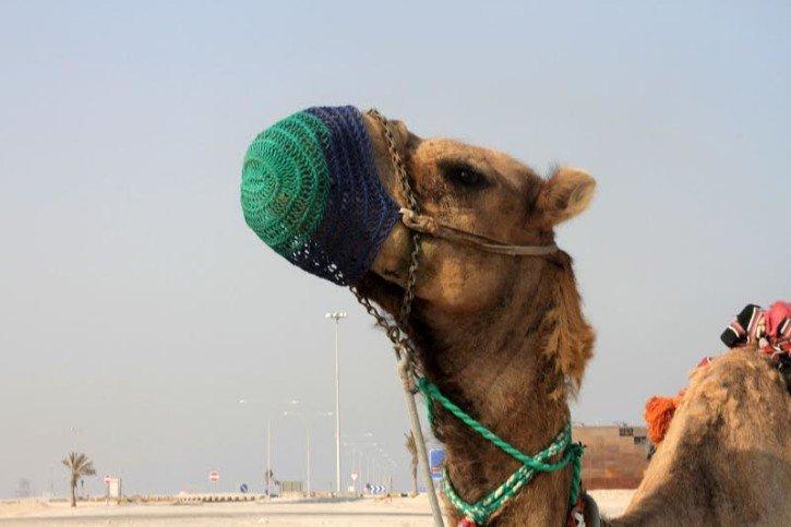 Travel Misconceptions - Doha, Qatar
