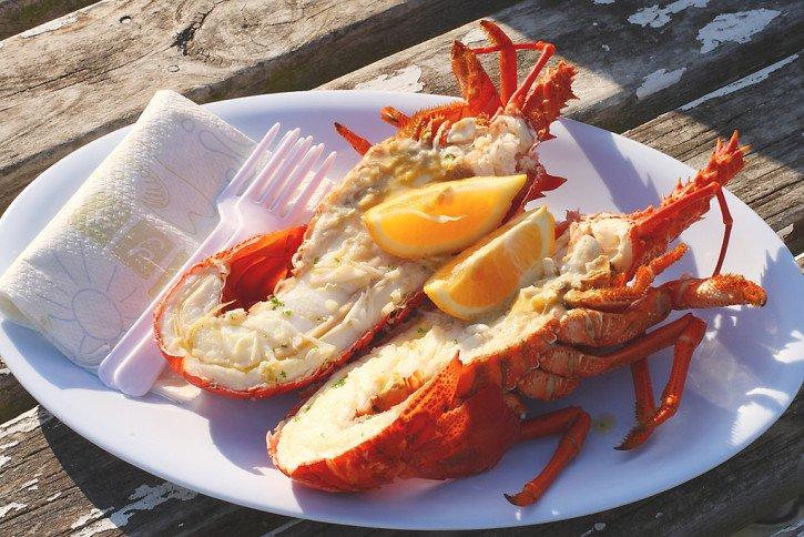 New Zealand Crayfish South Island