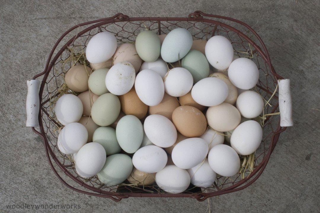Things to do in Santa Cruz, Glaum Egg Ranch