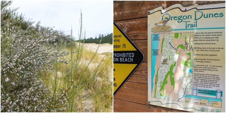 Sand Dunes in Florence, Oregon - hikes near Florence, Oregon