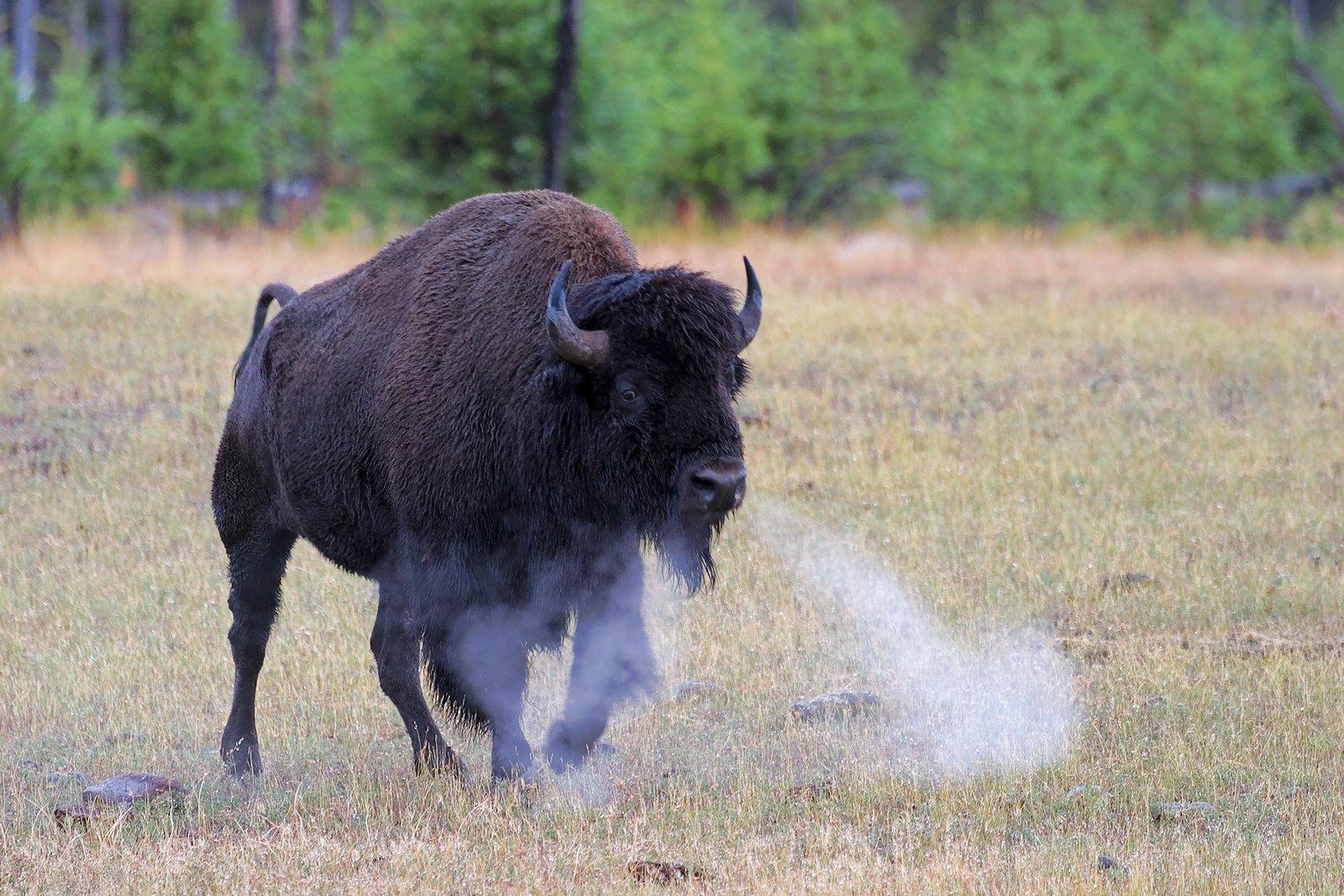 Yellowstone National Park - 2016 Destinations, The Atlas Heart