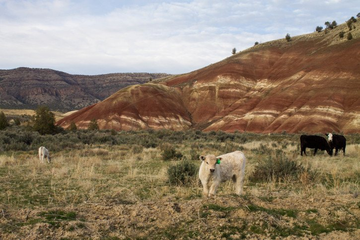 The Painted Hills at the John Day Fossil Beds - Oregon