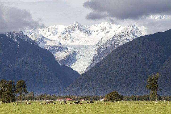 Fox Glacier on the South Island of New Zealand