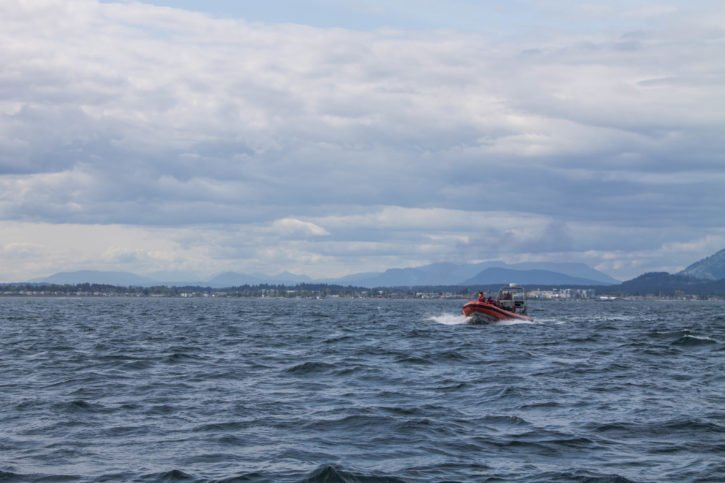 Whale watching in Victoria, Canada