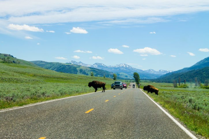 Lamar Valley - Yellowstone National Park - USA Travel