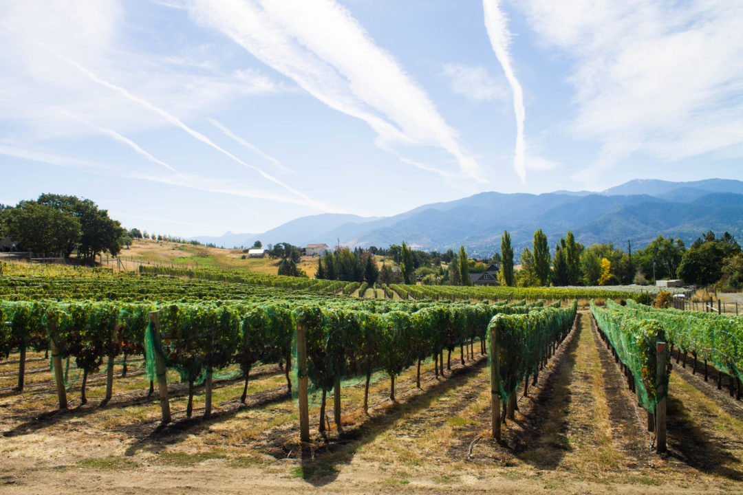 Grizzly Peak Winery in Ashland, Oregon - USA Travel | Ashland Oregon tourism