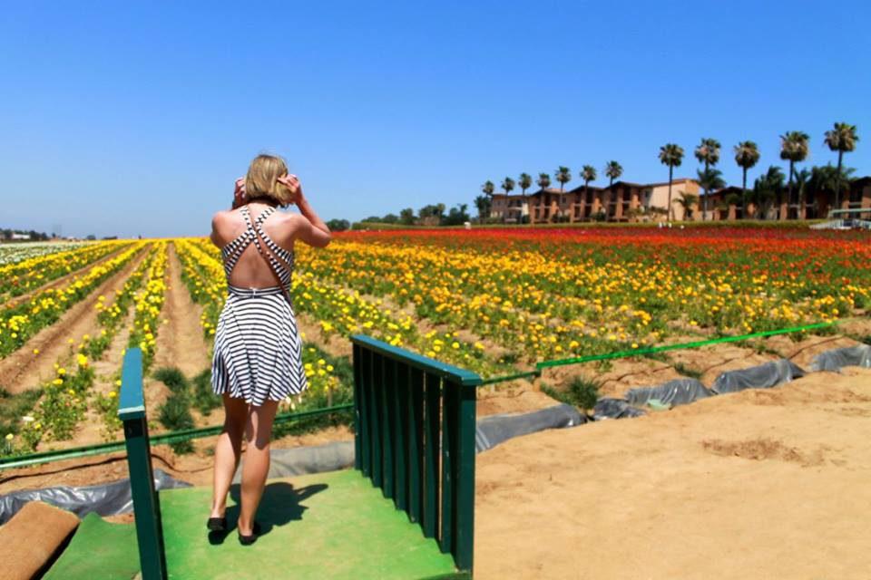 Flower Fields in Carlsbad, San Diego, USA Travel