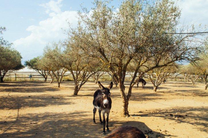 Donkey sanctuary in Crete, Greece - Europe Travel