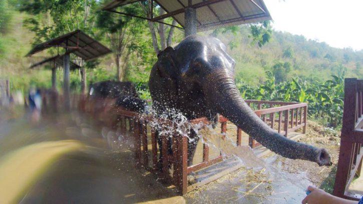 Washing elephants outside of Chiang Mai, Thailand