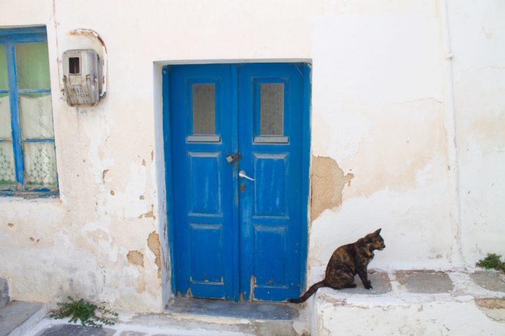 Kitty in Paros, Greece - Europe Travel