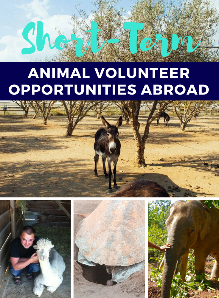 Short-Term Animal Volunteer Opportunities Abroad | The Atlas Heart