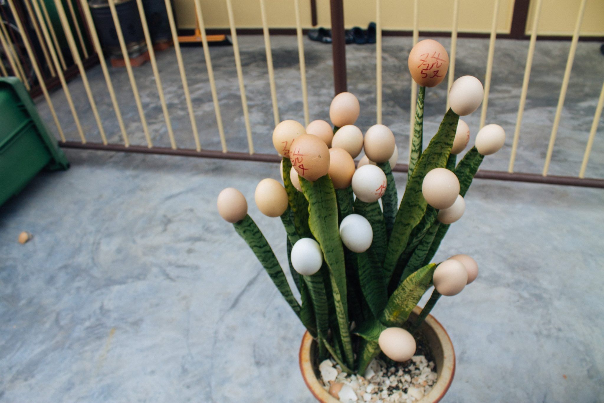 Egg shell bouquet in Georgetown, Penang Island, Malaysia | Asia Travel