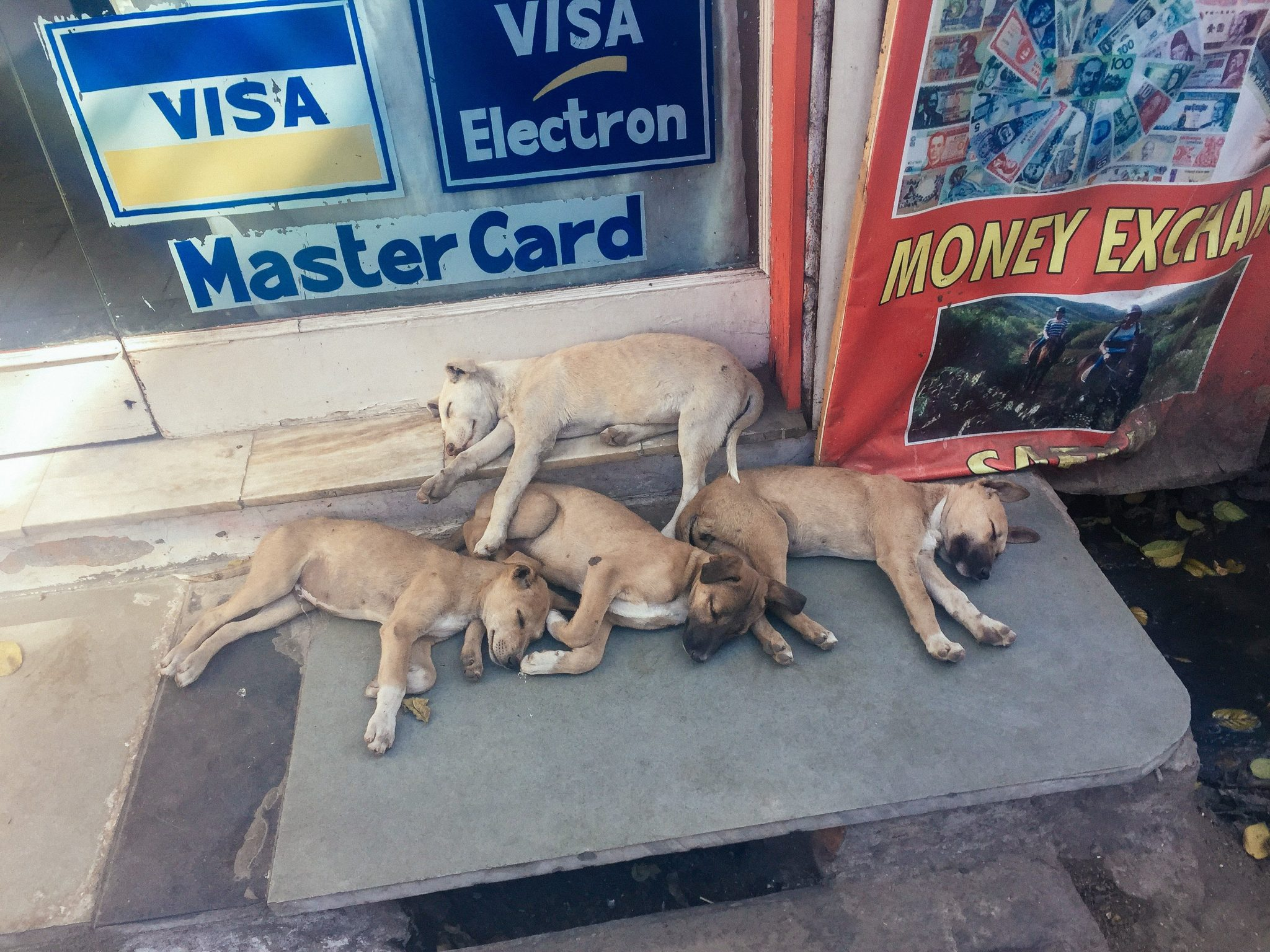 Wrap Up: February 2018 - Puppies in Udiapur, India