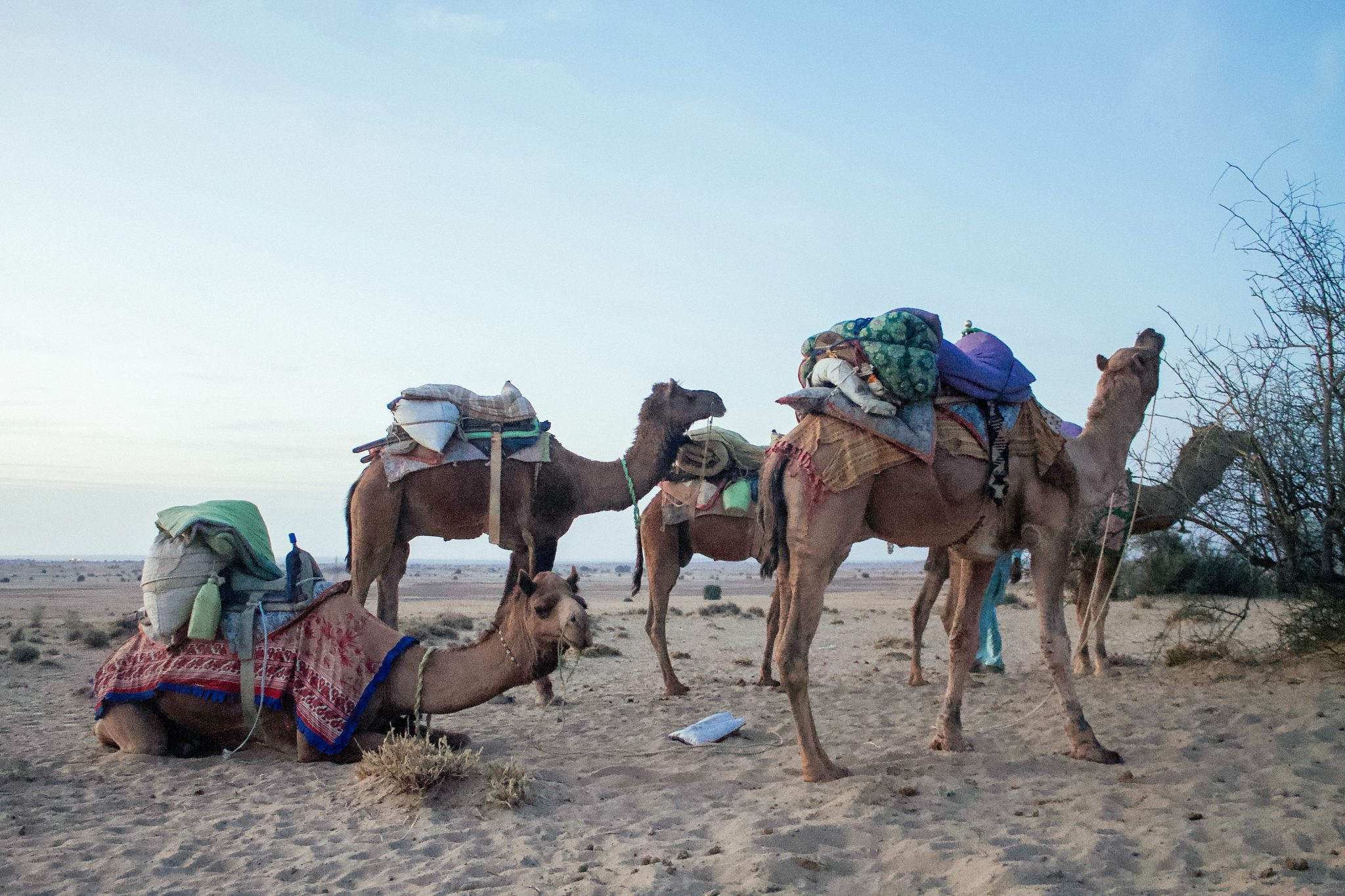 Camel Riding in the Thar Desert with Trotters | Two Week India Itinerary