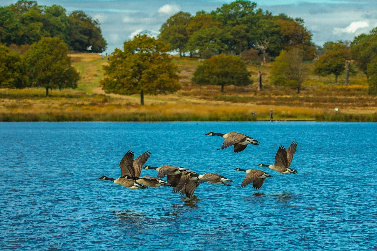 Richmond Park, London | 7 of the Most Peaceful Places around London