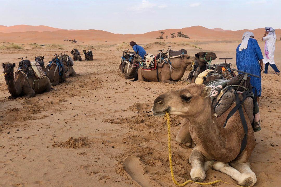 Marrakech desert tours with Ando Travel | Sahara Desert Morocco