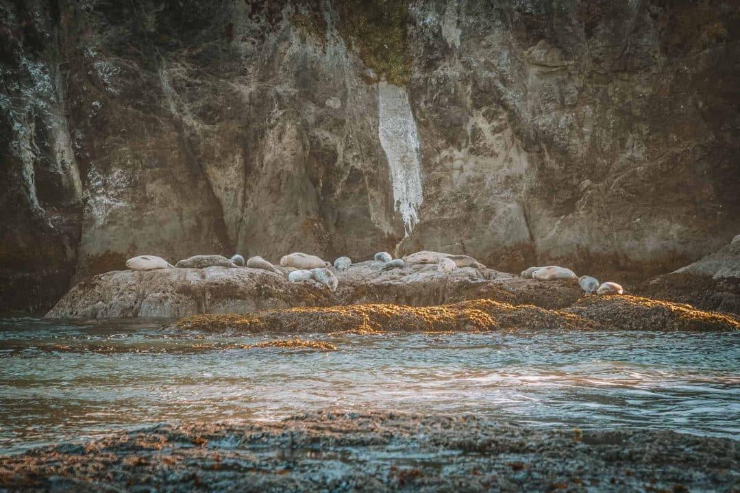 Bandon sea lions