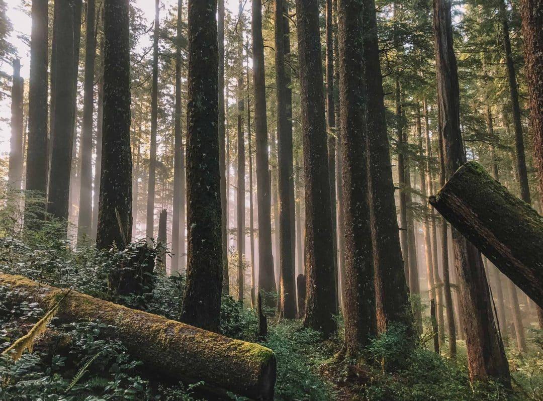 oregon forest on the coast