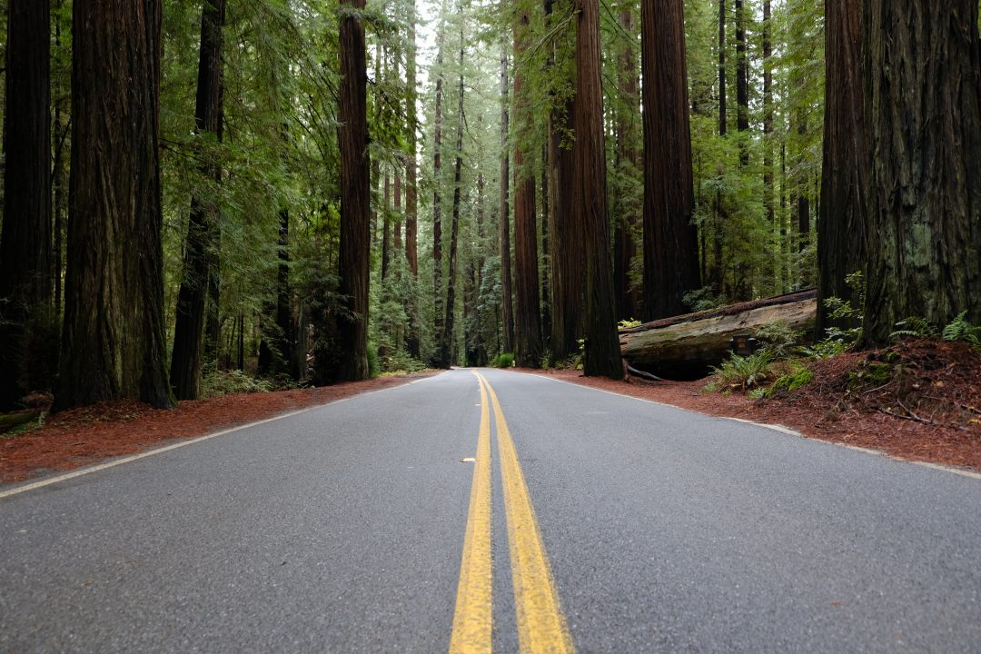 Avenue of the Giants | Northern California vacations