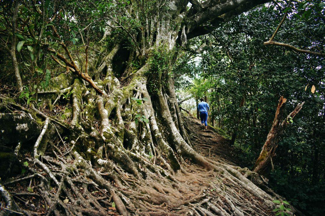 Wa'ahila Ridge State Recreation Area - Oahu Hikes