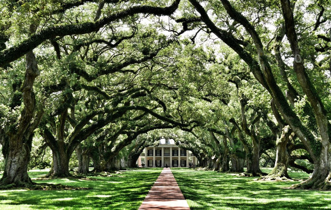 day trips from new orleans - oak alley plantation