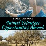 Best Animal Volunteer Opportunities Abroad