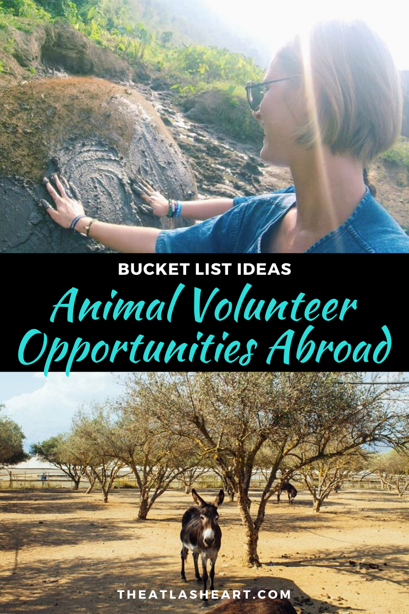 Best Animal Volunteer Opportunities Abroad