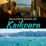 best things to do in kaikoura, new zealand