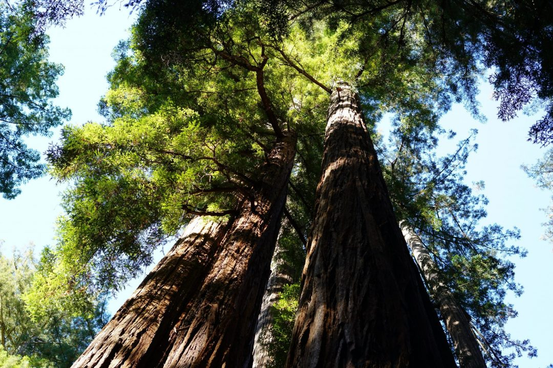 where to go in santa cruz - big basin redwoods state park in boulder creek
