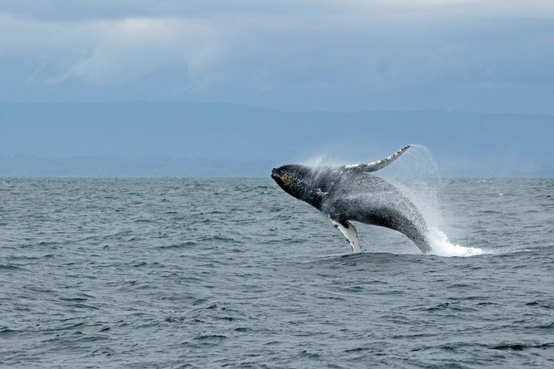 what to do in santa cruz ca - whale watching cruise