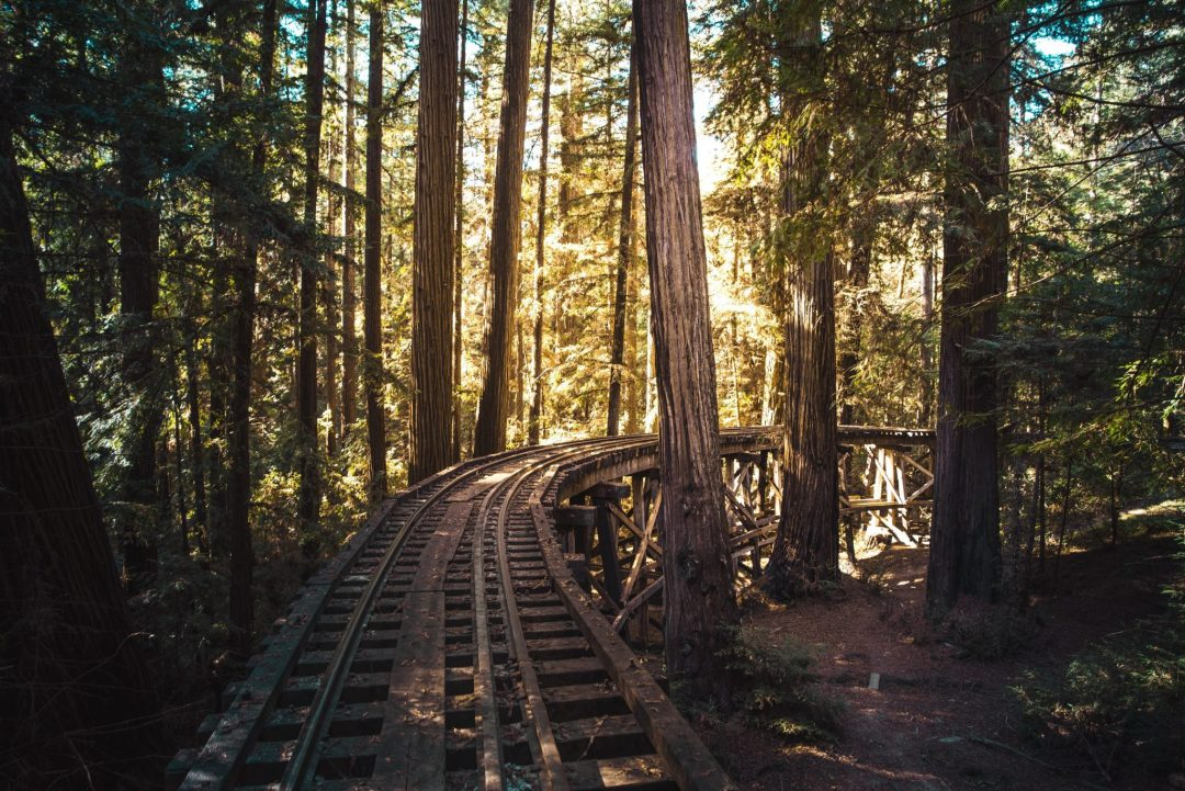 santa cruz to do - roaring camp railroad in felton