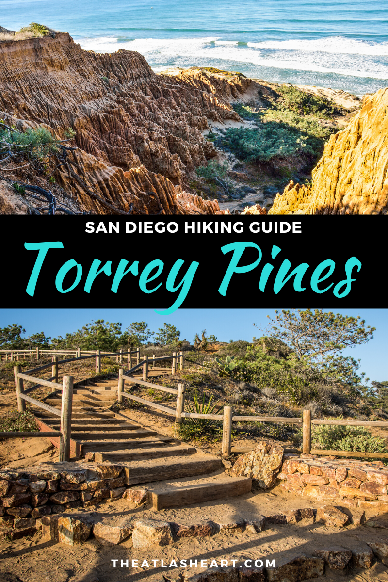 torrey pines hike - san diego hiking guide