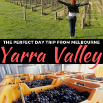 Yarra Valley Day Trip from Melbourne