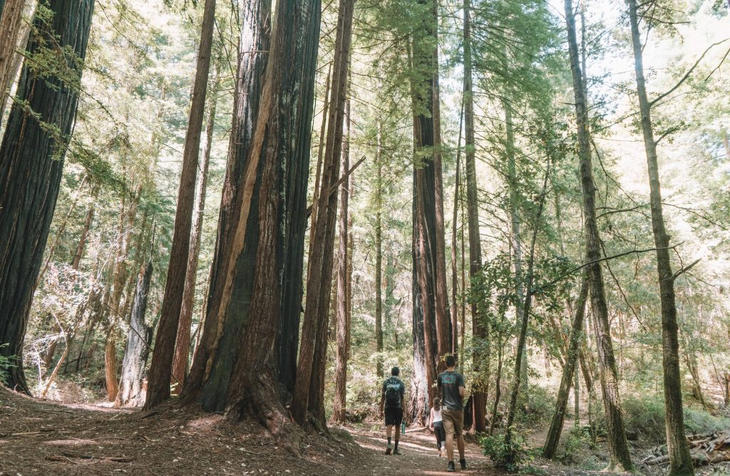 places to see redwoods near san francisco